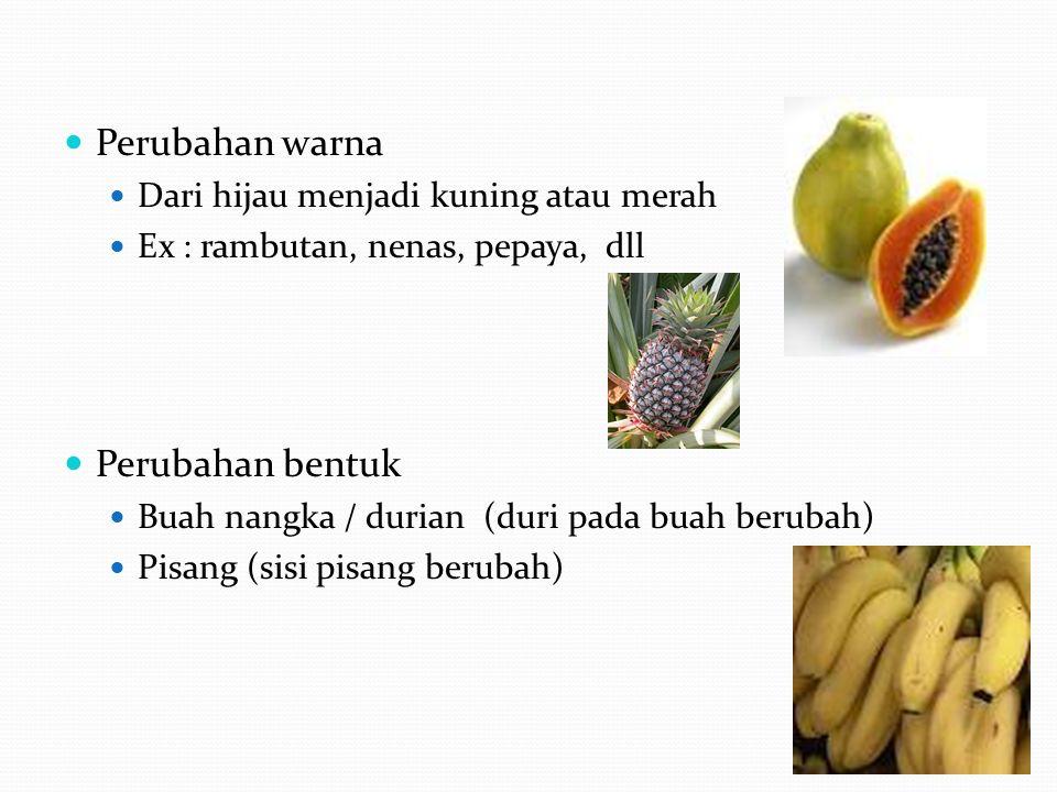 Pigmen utama pada jaringan tanaman adalah klorofil, antosianin, dan karotenoid Macam dan jumlah pigmen pada jaringan tanaman tergantung pada spesies, varietas, derajat kematangan, tempat tumbuh, dll Banyaknya sintesis pigmen dan pemecahannya pada buah-buahan dan sayuran dipengaruhi oleh kondisi penyimpanan