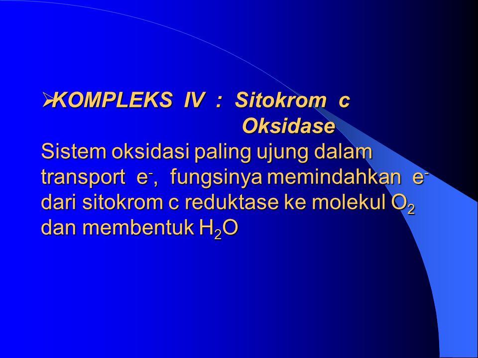  KOMPLEKS IV : Sitokrom c Oksidase Sistem oksidasi paling ujung dalam transport e -, fungsinya memindahkan e - dari sitokrom c reduktase ke molekul O 2 dan membentuk H 2 O