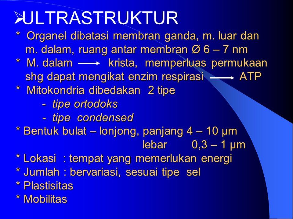  * Organel dibatasi membran ganda, m. luar dan m.