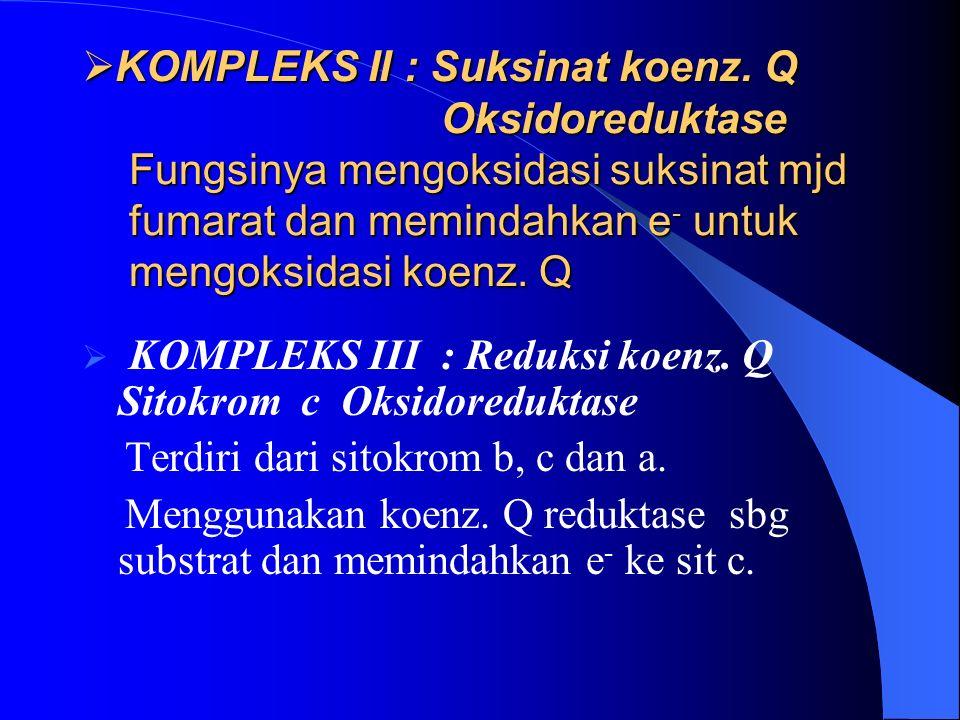  KOMPLEKS II : Suksinat koenz.