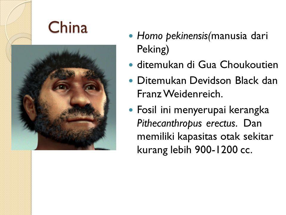 China Homo pekinensis(manusia dari Peking) ditemukan di Gua Choukoutien Ditemukan Devidson Black dan Franz Weidenreich.