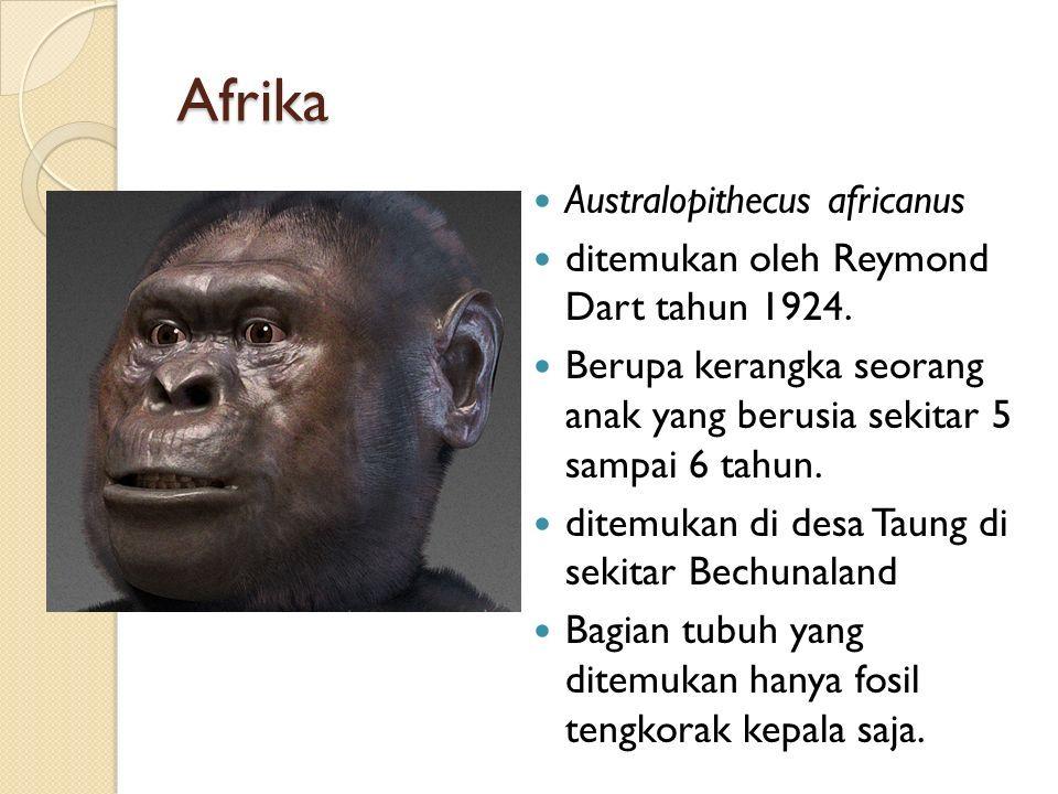 Afrika Australopithecus africanus ditemukan oleh Reymond Dart tahun 1924.
