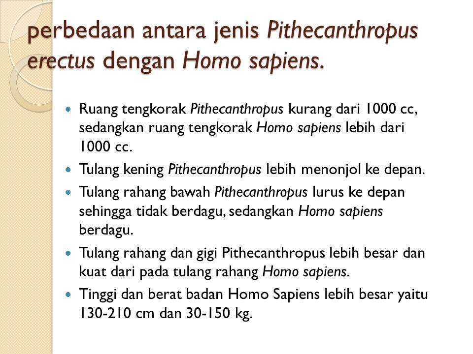 perbedaan antara jenis Pithecanthropus erectus dengan Homo sapiens.