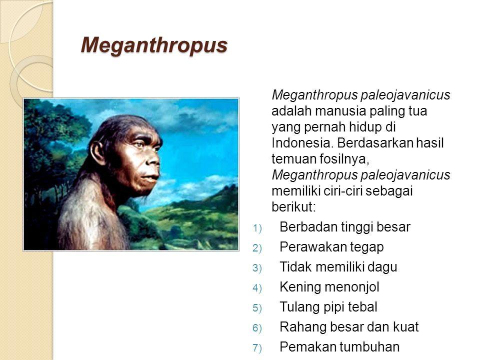 Meganthropus Meganthropus paleojavanicus adalah manusia paling tua yang pernah hidup di Indonesia.