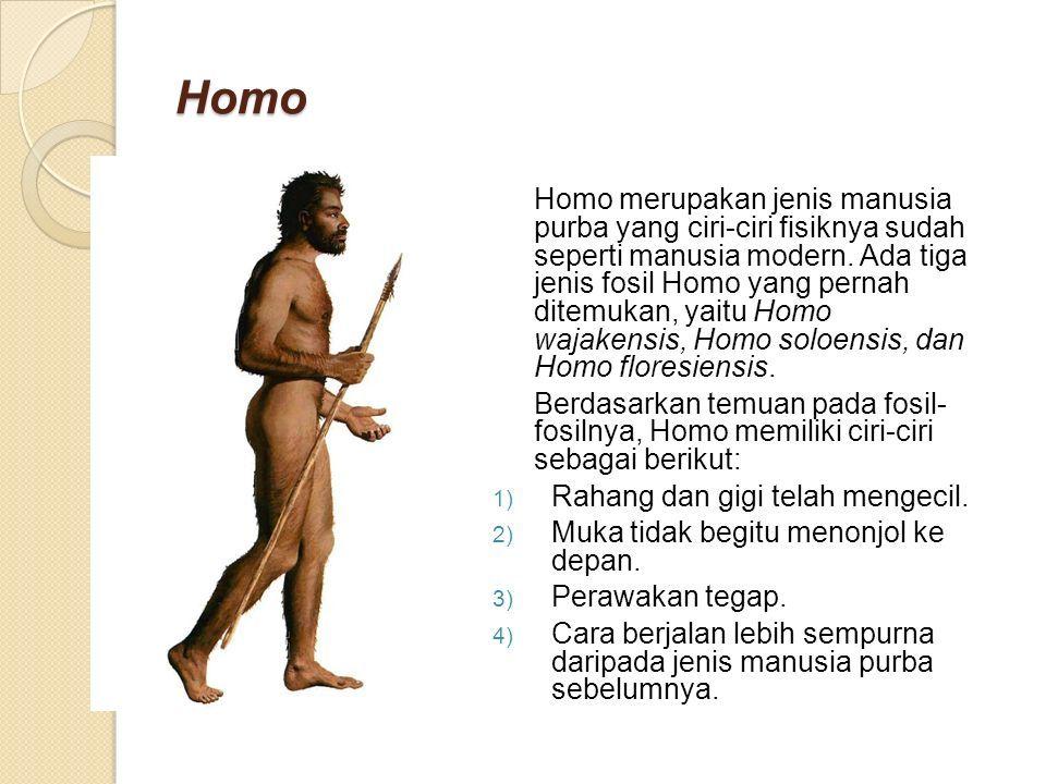 Homo Homo merupakan jenis manusia purba yang ciri-ciri fisiknya sudah seperti manusia modern.