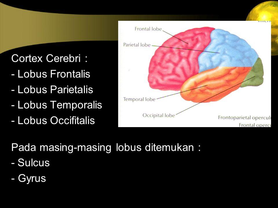 Cortex Cerebri : - Lobus Frontalis - Lobus Parietalis - Lobus Temporalis - Lobus Occifitalis Pada masing-masing lobus ditemukan : - Sulcus - Gyrus