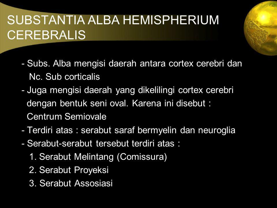 SUBSTANTIA ALBA HEMISPHERIUM CEREBRALIS - Subs. Alba mengisi daerah antara cortex cerebri dan Nc. Sub corticalis - Juga mengisi daerah yang dikeliling