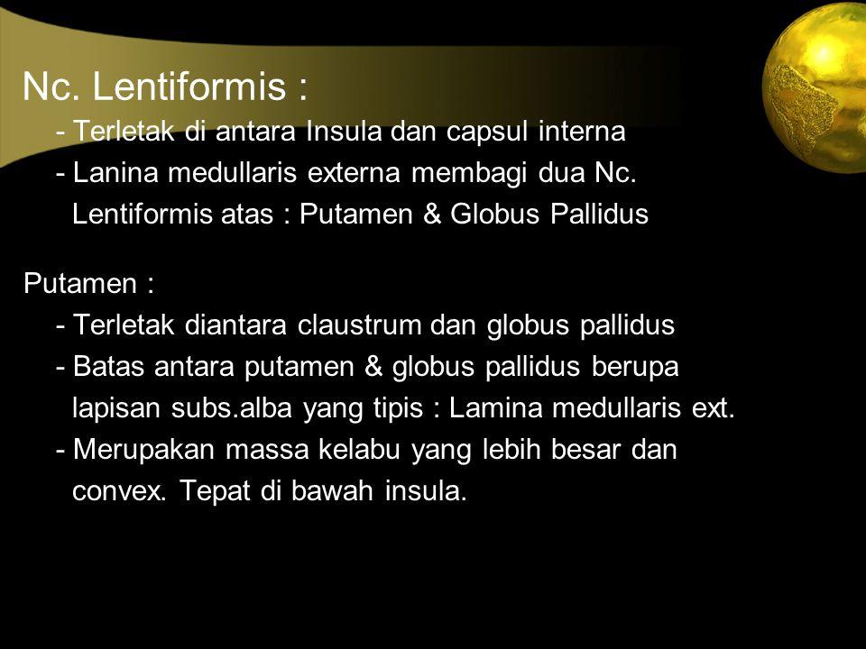 Nc. Lentiformis : - Terletak di antara Insula dan capsul interna - Lanina medullaris externa membagi dua Nc. Lentiformis atas : Putamen & Globus Palli