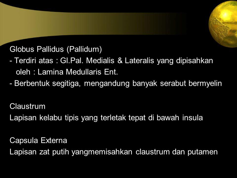 Globus Pallidus (Pallidum) - Terdiri atas : Gl.Pal. Medialis & Lateralis yang dipisahkan oleh : Lamina Medullaris Ent. - Berbentuk segitiga, mengandun