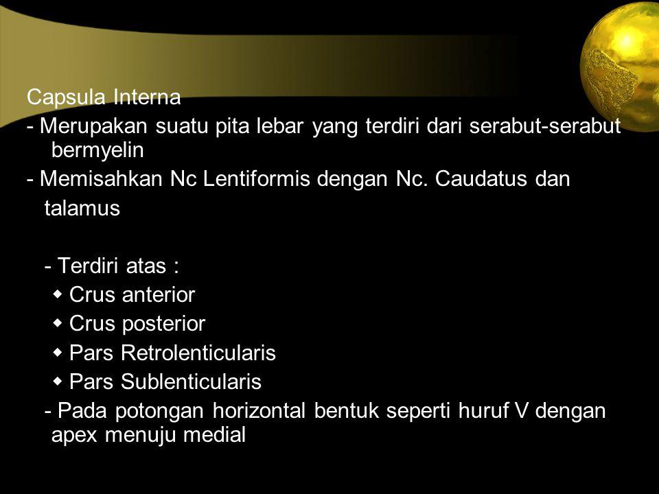 Capsula Interna - Merupakan suatu pita lebar yang terdiri dari serabut-serabut bermyelin - Memisahkan Nc Lentiformis dengan Nc. Caudatus dan talamus -