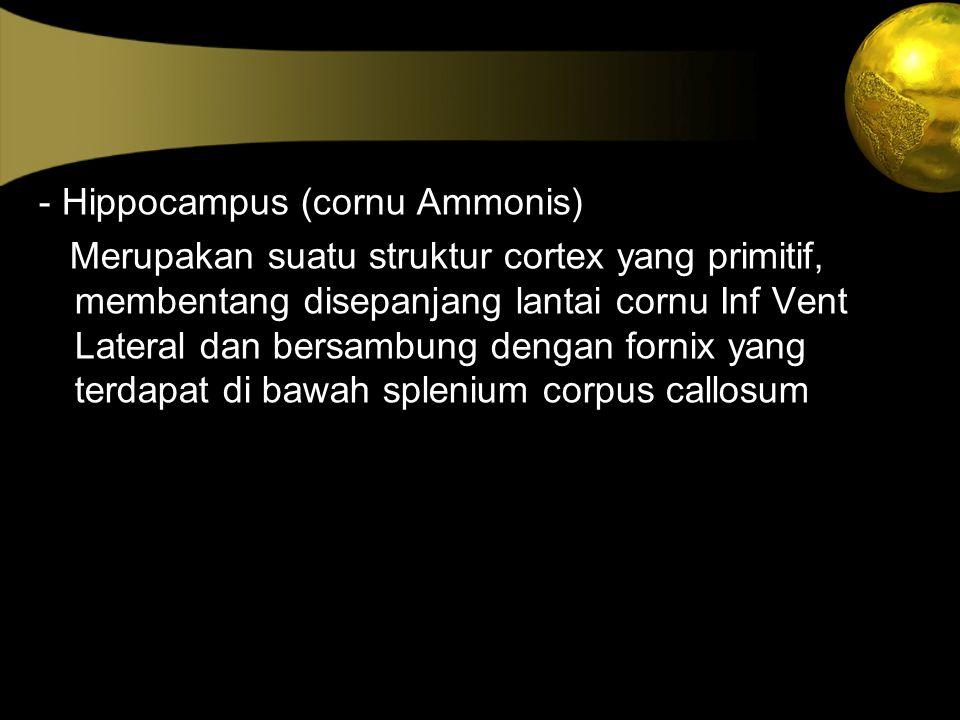 - Hippocampus (cornu Ammonis) Merupakan suatu struktur cortex yang primitif, membentang disepanjang lantai cornu Inf Vent Lateral dan bersambung denga