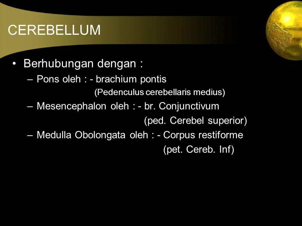 CEREBELLUM •Berhubungan dengan : –Pons oleh : - brachium pontis (Pedenculus cerebellaris medius) –Mesencephalon oleh : - br. Conjunctivum (ped. Cerebe