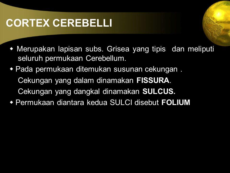 CORTEX CEREBELLI  Merupakan lapisan subs. Grisea yang tipis dan meliputi seluruh permukaan Cerebellum.  Pada permukaan ditemukan susunan cekungan. C