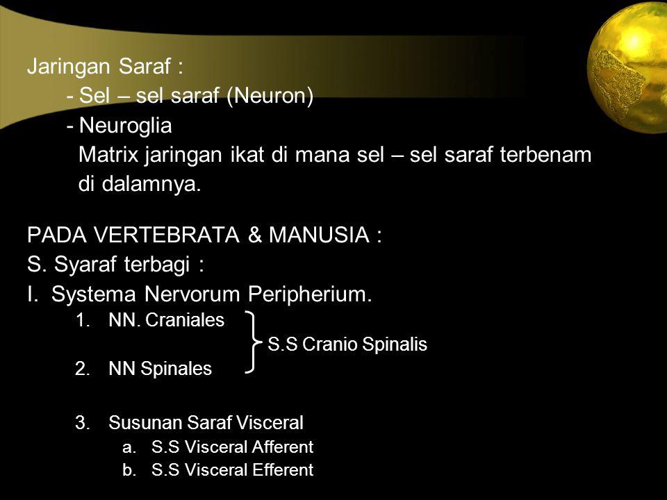 Jaringan Saraf : - Sel – sel saraf (Neuron) - Neuroglia Matrix jaringan ikat di mana sel – sel saraf terbenam di dalamnya. PADA VERTEBRATA & MANUSIA :
