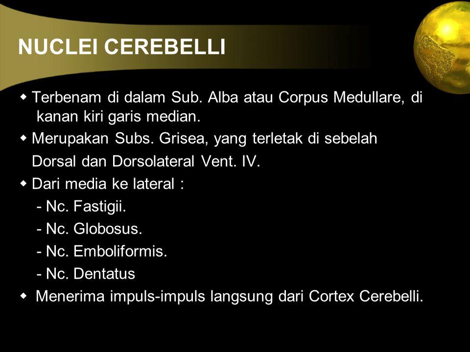 NUCLEI CEREBELLI  Terbenam di dalam Sub. Alba atau Corpus Medullare, di kanan kiri garis median.  Merupakan Subs. Grisea, yang terletak di sebelah D
