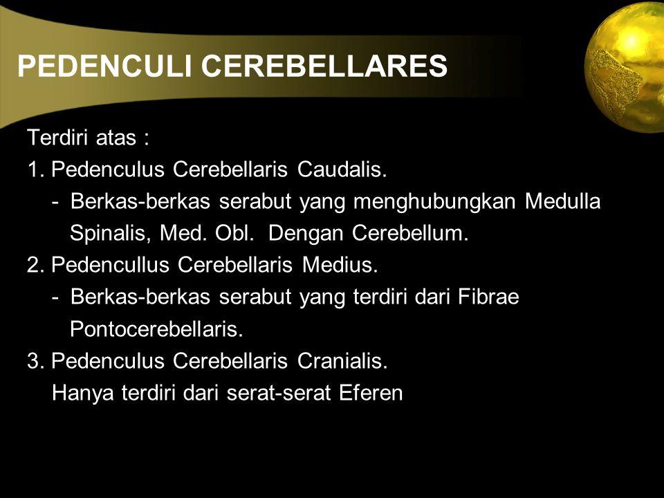 PEDENCULI CEREBELLARES Terdiri atas : 1. Pedenculus Cerebellaris Caudalis. - Berkas-berkas serabut yang menghubungkan Medulla Spinalis, Med. Obl. Deng