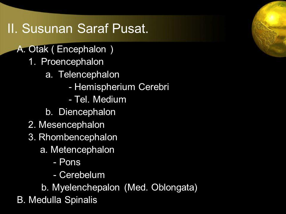 II. Susunan Saraf Pusat. A. Otak ( Encephalon ) 1. Proencephalon a. Telencephalon - Hemispherium Cerebri - Tel. Medium b. Diencephalon 2. Mesencephalo