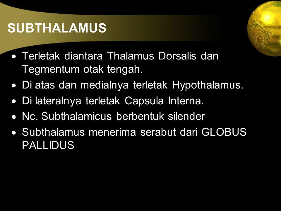 SUBTHALAMUS  Terletak diantara Thalamus Dorsalis dan Tegmentum otak tengah.  Di atas dan medialnya terletak Hypothalamus.  Di lateralnya terletak C