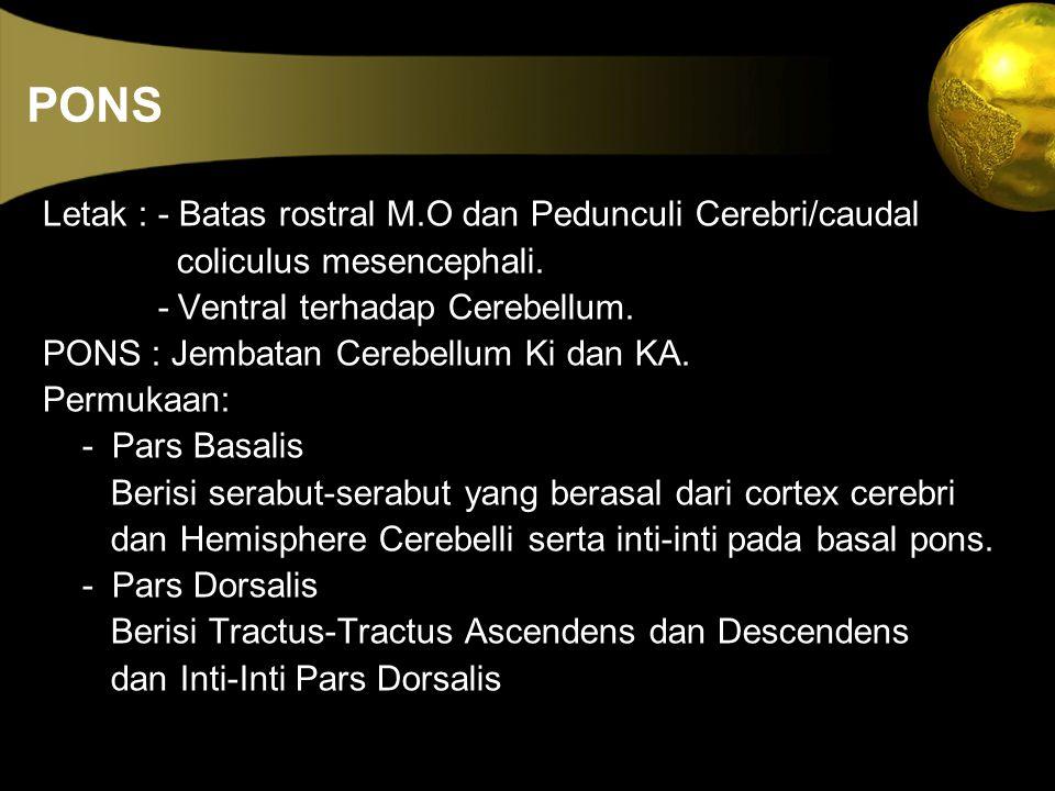 PONS Letak : - Batas rostral M.O dan Pedunculi Cerebri/caudal coliculus mesencephali. - Ventral terhadap Cerebellum. PONS : Jembatan Cerebellum Ki dan