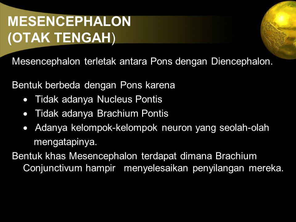 MESENCEPHALON (OTAK TENGAH) Mesencephalon terletak antara Pons dengan Diencephalon. Bentuk berbeda dengan Pons karena  Tidak adanya Nucleus Pontis 