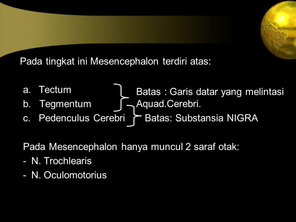 Pada tingkat ini Mesencephalon terdiri atas: a. Tectum b. Tegmentum c. Pedenculus Cerebri Batas: Substansia NIGRA Pada Mesencephalon hanya muncul 2 sa