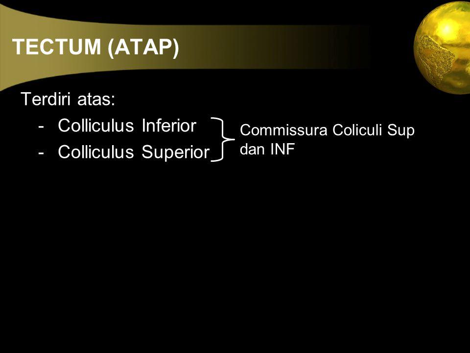 TECTUM (ATAP) Terdiri atas: - Colliculus Inferior - Colliculus Superior Commissura Coliculi Sup dan INF
