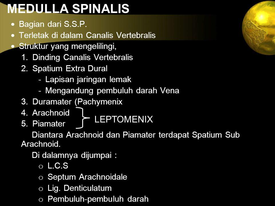 MEDULLA SPINALIS  Bagian dari S.S.P.  Terletak di dalam Canalis Vertebralis  Struktur yang mengelilingi, 1. Dinding Canalis Vertebralis 2. Spatium