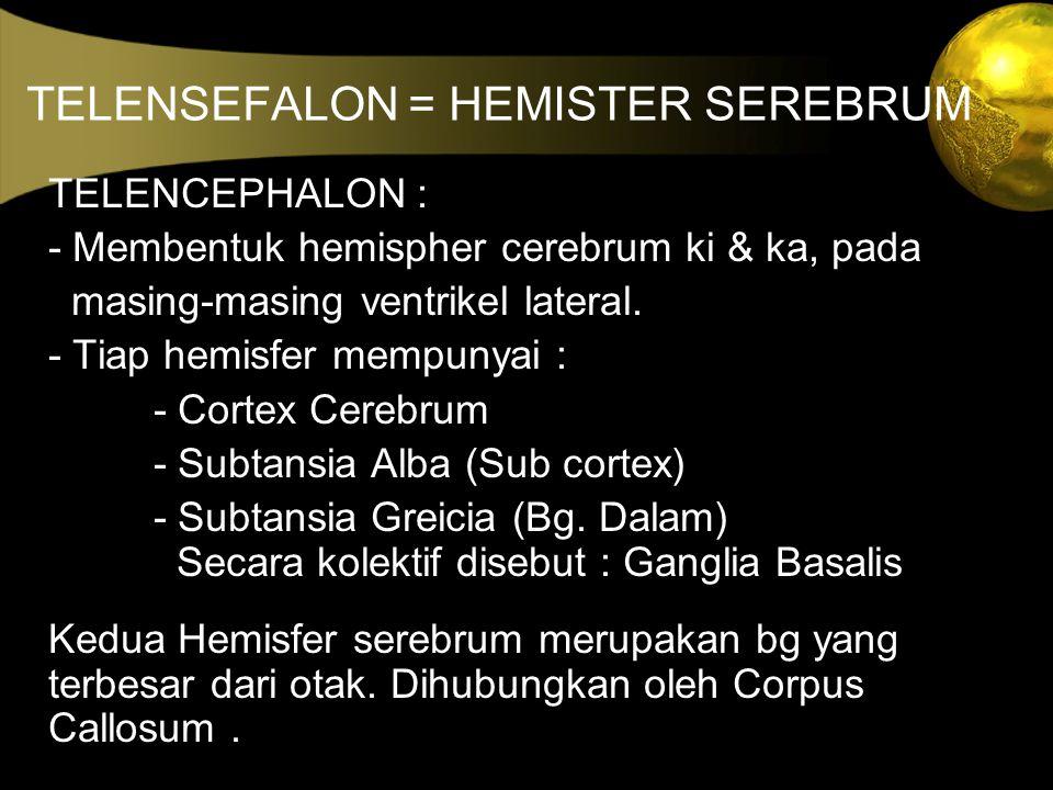 TELENSEFALON = HEMISTER SEREBRUM TELENCEPHALON : - Membentuk hemispher cerebrum ki & ka, pada masing-masing ventrikel lateral. - Tiap hemisfer mempuny