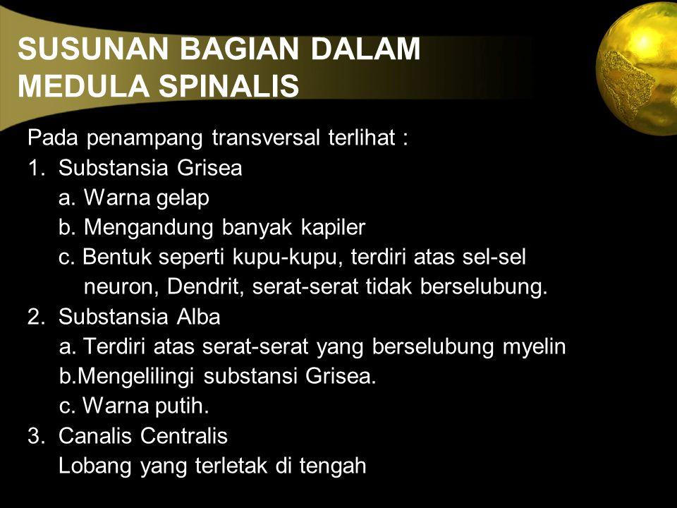 SUSUNAN BAGIAN DALAM MEDULA SPINALIS Pada penampang transversal terlihat : 1. Substansia Grisea a. Warna gelap b. Mengandung banyak kapiler c. Bentuk