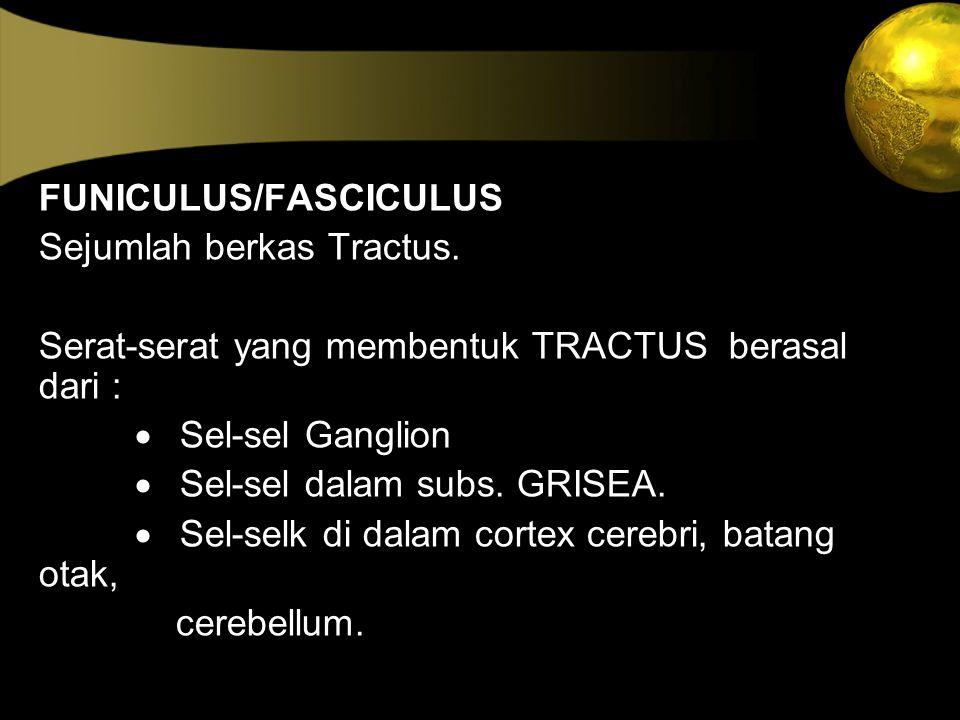 FUNICULUS/FASCICULUS Sejumlah berkas Tractus. Serat-serat yang membentuk TRACTUS berasal dari :  Sel-sel Ganglion  Sel-sel dalam subs. GRISEA.  Sel