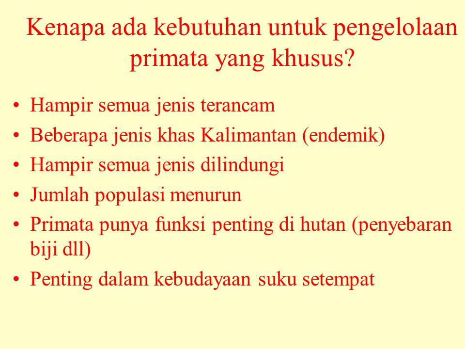 Kenapa ada kebutuhan untuk pengelolaan primata yang khusus? •Hampir semua jenis terancam •Beberapa jenis khas Kalimantan (endemik) •Hampir semua jenis