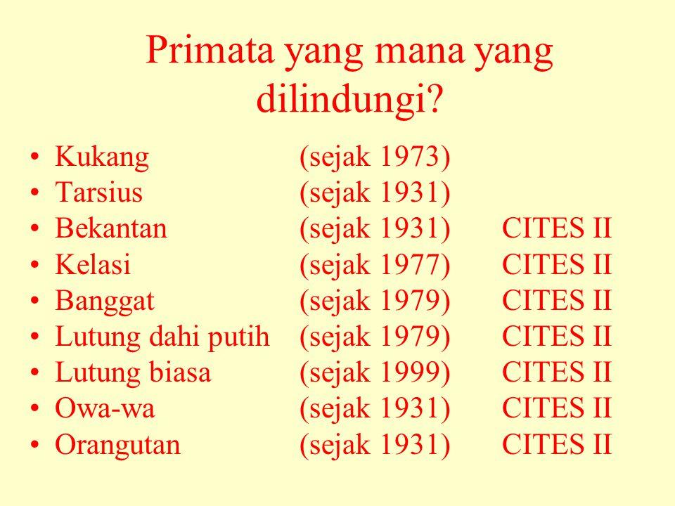 Primata yang mana yang dilindungi? •Kukang (sejak 1973) •Tarsius (sejak 1931) •Bekantan (sejak 1931) CITES II •Kelasi (sejak 1977) CITES II •Banggat (