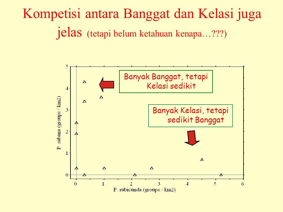 Kompetisi antara Banggat dan Kelasi juga jelas (tetapi belum ketahuan kenapa…???) Banyak Banggat, tetapi Kelasi sedikit Banyak Kelasi, tetapi sedikit