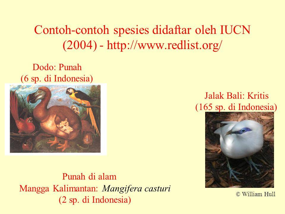 Contoh-contoh spesies didaftar oleh IUCN (2004) - http://www.redlist.org/ © William Hull Jalak Bali: Kritis (165 sp. di Indonesia) Dodo: Punah (6 sp.