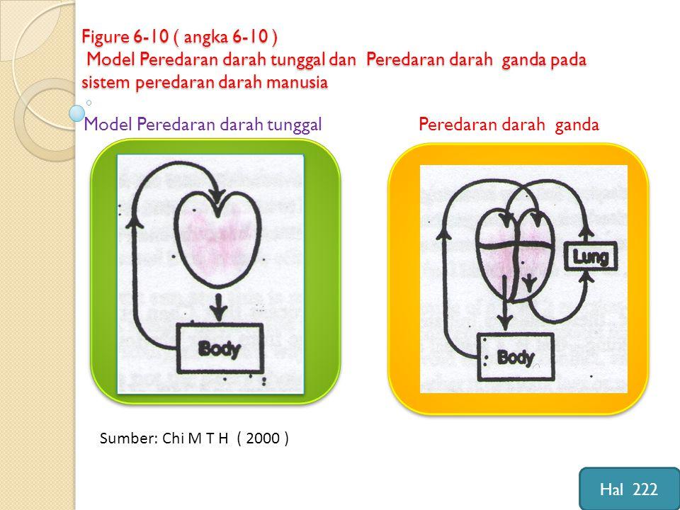 Figure 6-10 ( angka 6-10 ) Model Peredaran darah tunggal dan Peredaran darah ganda pada sistem peredaran darah manusia Model Peredaran darah tunggal Peredaran darah ganda Sumber: Chi M T H ( 2000 ) Hal 222