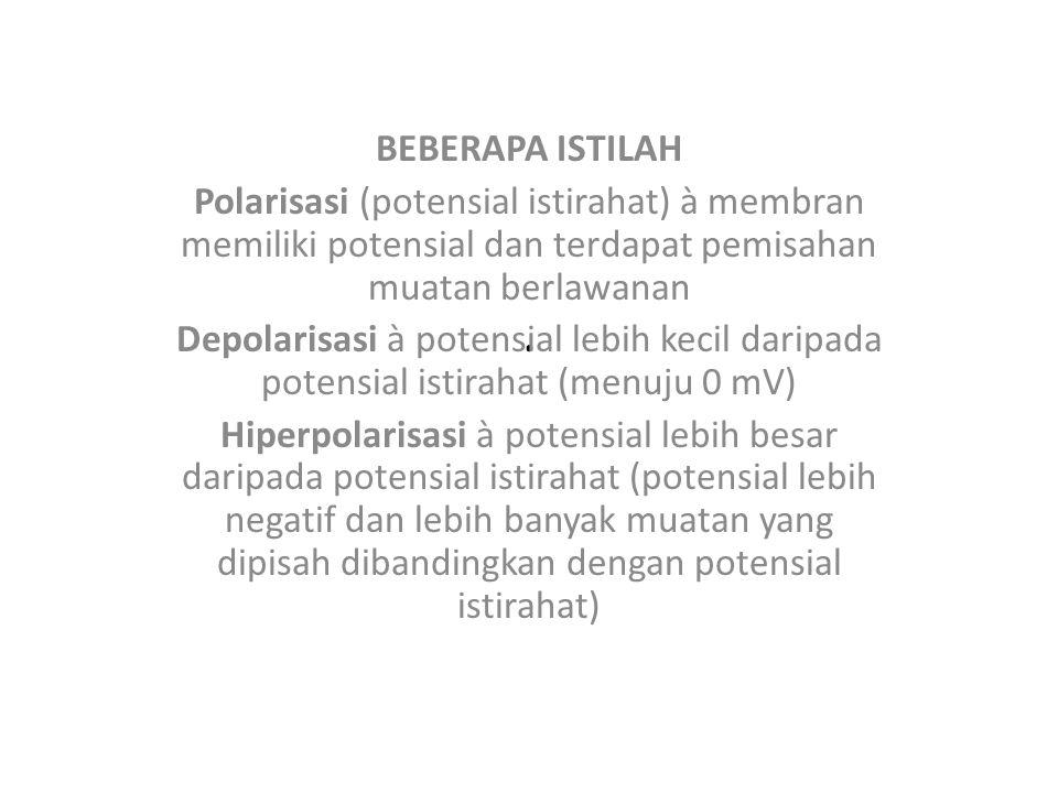 . BEBERAPA ISTILAH Polarisasi (potensial istirahat) à membran memiliki potensial dan terdapat pemisahan muatan berlawanan Depolarisasi à potensial leb