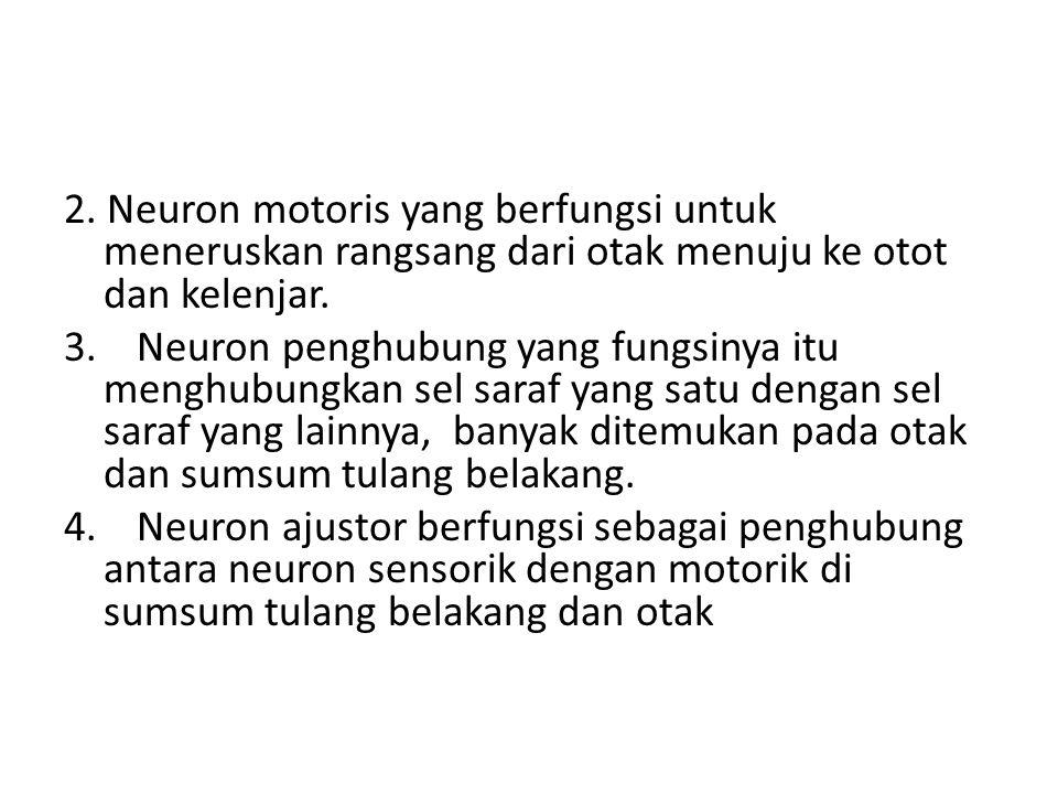 2. Neuron motoris yang berfungsi untuk meneruskan rangsang dari otak menuju ke otot dan kelenjar. 3. Neuron penghubung yang fungsinya itu menghubungka
