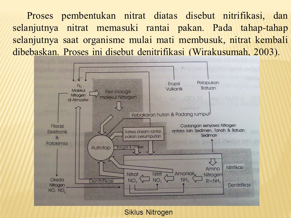 D. Siklus Nitrogen Cadangan nitrogen anorganik adalah gas N 2, yang membangun ± 78 % udara. Tetapi N 2 mempunyai aktivitas biologis yang kecil. Gas in