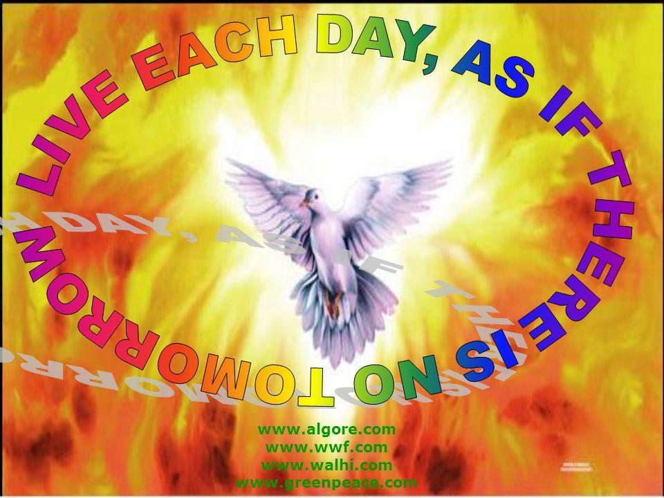 www.algore.com www.wwf.com www.walhi.com www.greenpeace.com