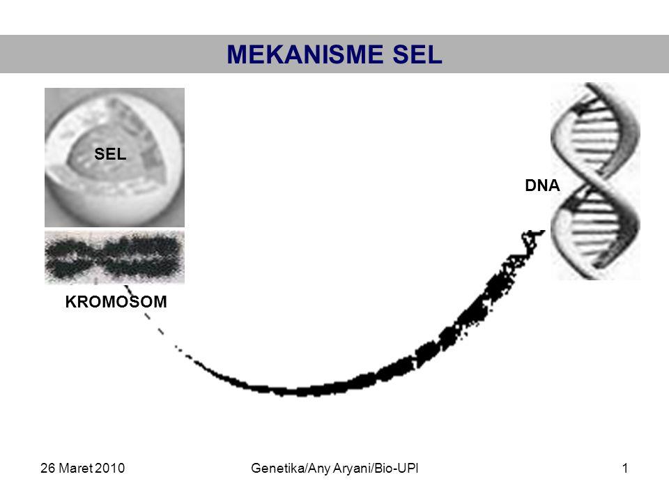 26 Maret 2010Genetika/Any Aryani/Bio-UPI1 MEKANISME SEL SEL KROMOSOM DNA