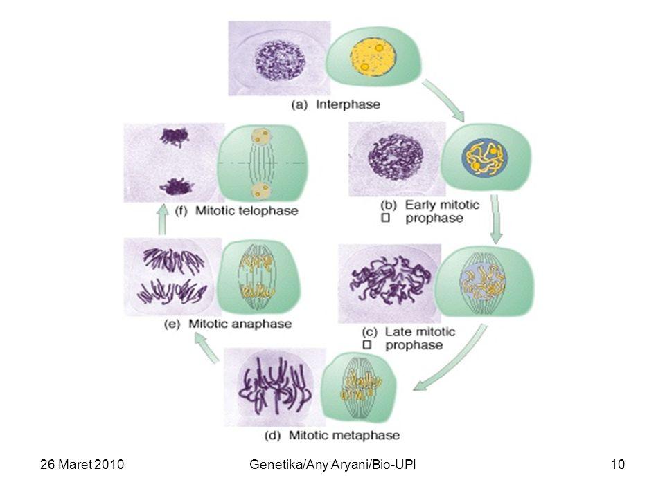 26 Maret 2010Genetika/Any Aryani/Bio-UPI10