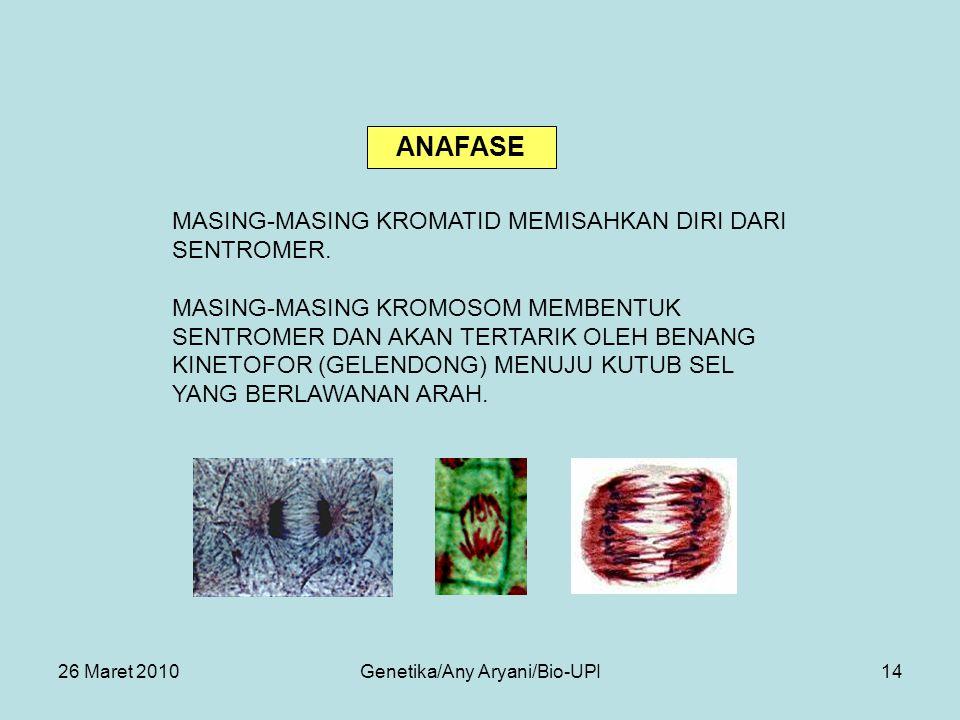 26 Maret 2010Genetika/Any Aryani/Bio-UPI14 MASING-MASING KROMATID MEMISAHKAN DIRI DARI SENTROMER.