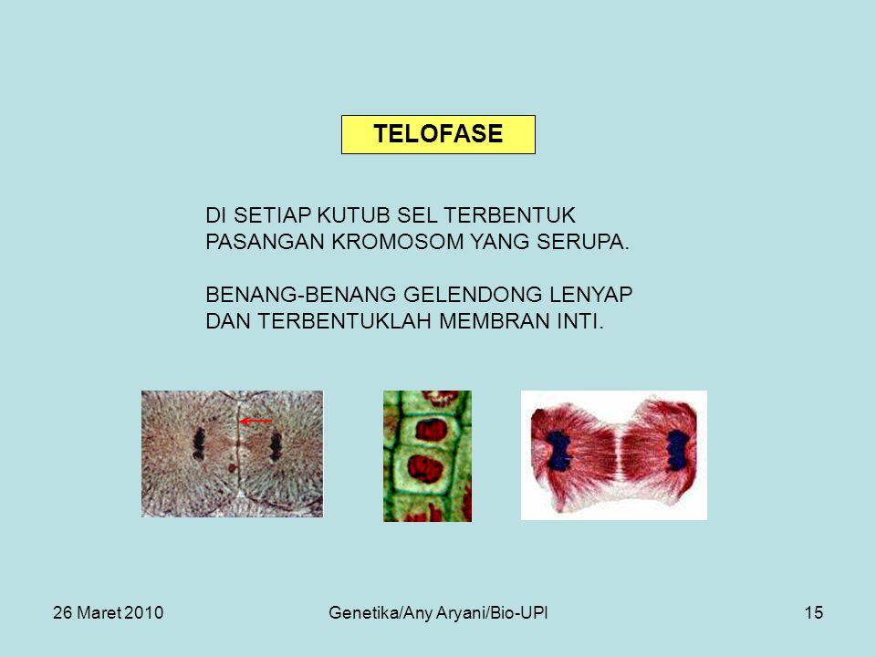 26 Maret 2010Genetika/Any Aryani/Bio-UPI15 DI SETIAP KUTUB SEL TERBENTUK PASANGAN KROMOSOM YANG SERUPA.