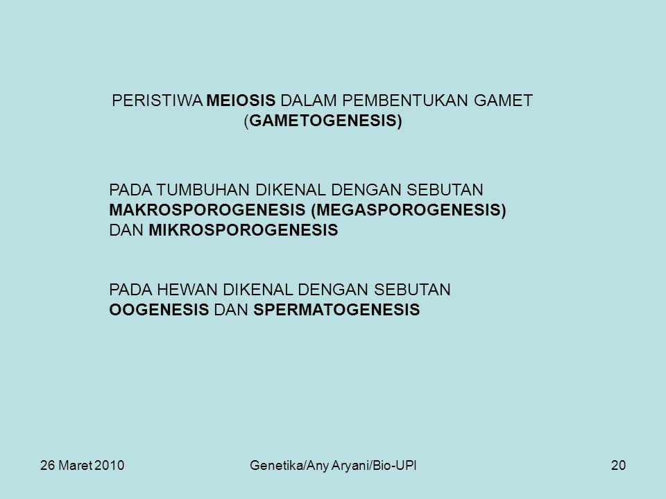 26 Maret 2010Genetika/Any Aryani/Bio-UPI20 PADA HEWAN DIKENAL DENGAN SEBUTAN OOGENESIS DAN SPERMATOGENESIS PERISTIWA MEIOSIS DALAM PEMBENTUKAN GAMET (GAMETOGENESIS) PADA TUMBUHAN DIKENAL DENGAN SEBUTAN MAKROSPOROGENESIS (MEGASPOROGENESIS) DAN MIKROSPOROGENESIS