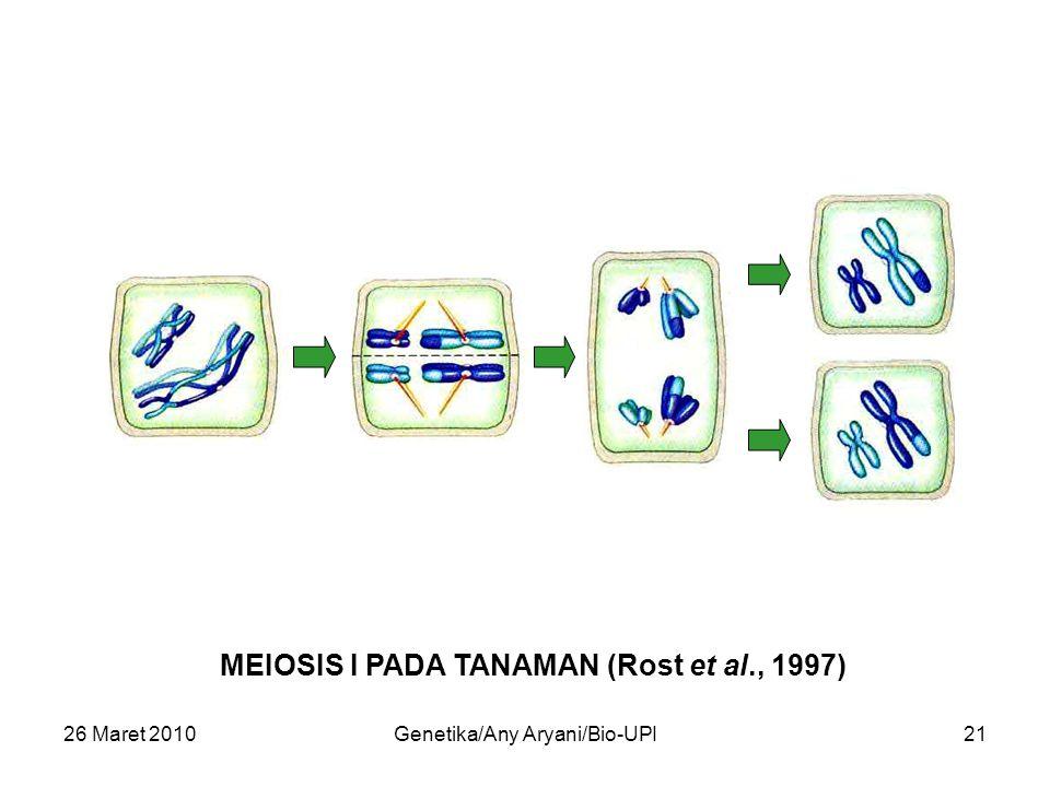 26 Maret 2010Genetika/Any Aryani/Bio-UPI21 MEIOSIS I PADA TANAMAN (Rost et al., 1997)