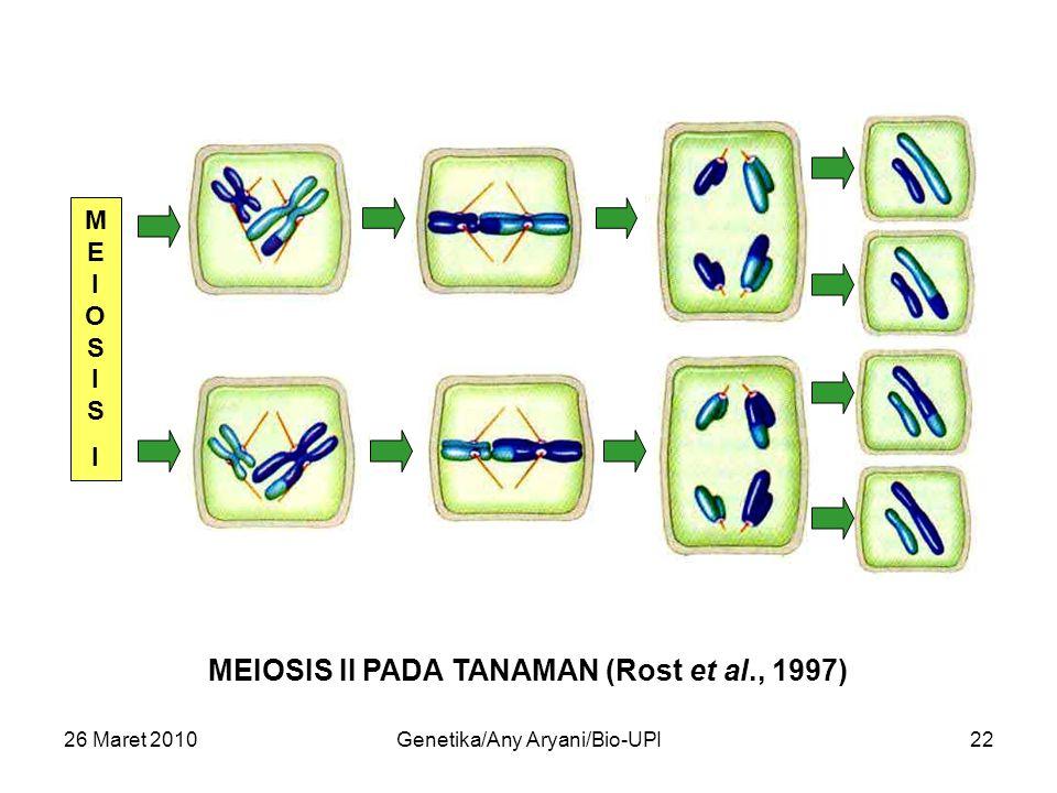 26 Maret 2010Genetika/Any Aryani/Bio-UPI22 MEIOSISIMEIOSISI MEIOSIS II PADA TANAMAN (Rost et al., 1997)