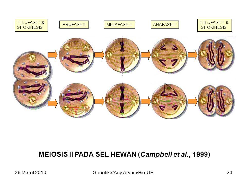 26 Maret 2010Genetika/Any Aryani/Bio-UPI24 MEIOSIS II PADA SEL HEWAN (Campbell et al., 1999) TELOFASE I & SITOKINESIS PROFASE IIMETAFASE IIANAFASE II TELOFASE II & SITOKINESIS
