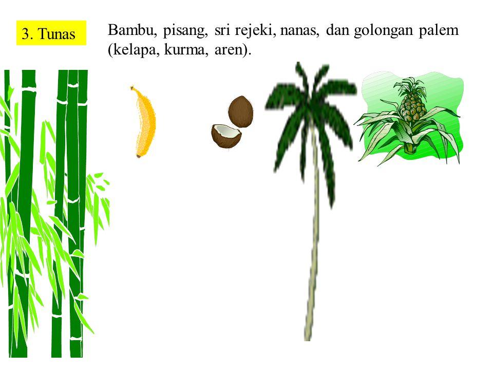 2. SporaPada jamur, tumbuhan paku, lumut, dan lumut kerak Jika spora-spora jatuh di tempat lembab Tumbuhan Paku Lumut Kerak Kotak tempat spora namanya