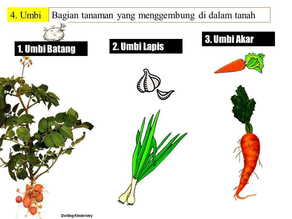 3. Tunas Bambu, pisang, sri rejeki, nanas, dan golongan palem (kelapa, kurma, aren).
