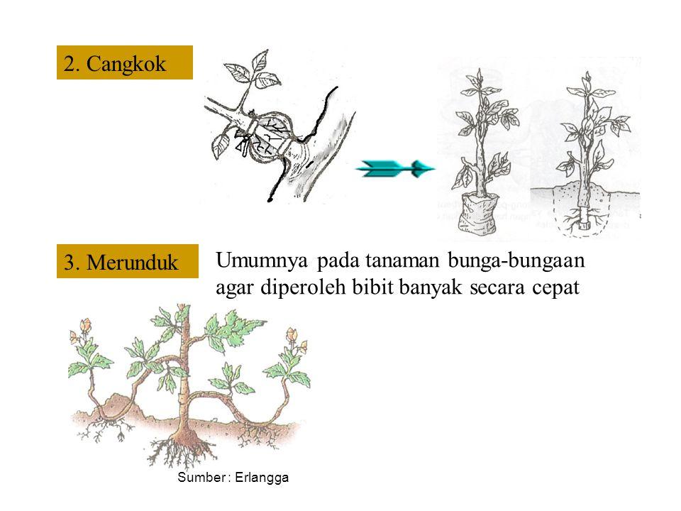 Vegetatif Buatan 1. Setek Menanam potongan sebagian tubuh tumbuhan a. Batang,b. daunc. pucukd. tangkai
